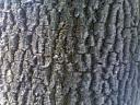 Ehe, daca am sti cate a vazut scoarta asta de copac…ar iesi un film de foarte lung metraj