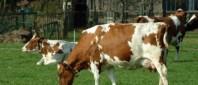 vaci-export-e1409643112715