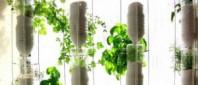 agricultura-acvaponica_SUA-300x169