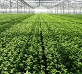 sere-romania-legume-e1425200889662
