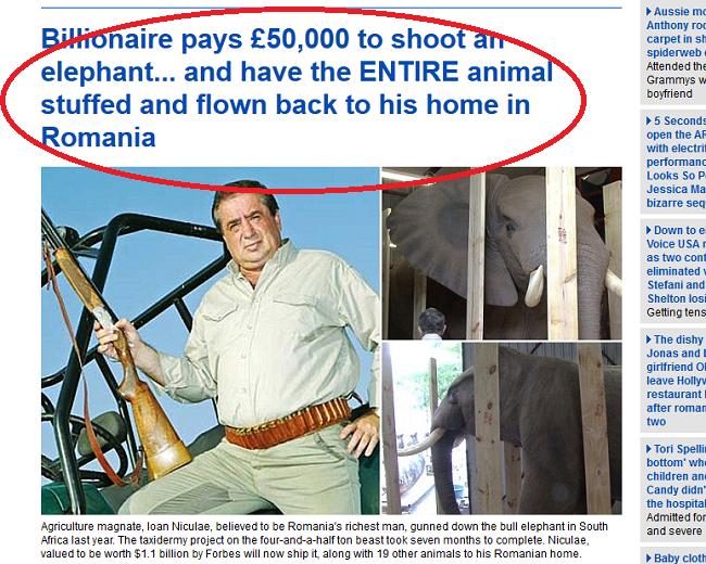 Nu e glumă, e poveste reală! Ioan Niculae a ajuns pe primele pagini ale ziarelor europene (aici, captură din cotidianul britanic Daily Mail) cu o poveste extravagantă: la o vânătoare în Africa, a împușcat un elefant, după care a plătit 50.000 de euro pentru împăierea și aducerea lui în România, ca să-l expună ca trofeu pe una din proprietățile sale... Vă dați seama că și niște africani amărâți vor rămâne fără locuri de muncă în urma deciziei hainei Justiții românești?!...